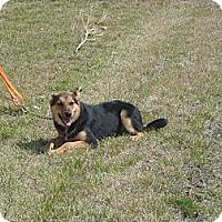 Adopt A Pet :: Jenny - Windsor, MO