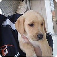 Adopt A Pet :: Puff - Cumming, GA