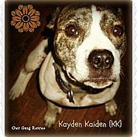 Adopt A Pet :: Kayden Kaiden (KK) - Cincinnati, OH