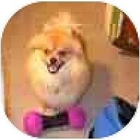 Adopt A Pet :: Taz - Chesapeake, VA