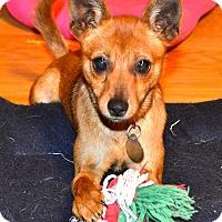 Adopt A Pet :: Ellie - Homewood, AL