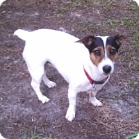 Adopt A Pet :: Lucy - Edisto Island, SC