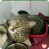 Adopt A Pet :: Opie - Butner, NC