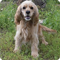 Adopt A Pet :: Kelsey - Campbell, CA