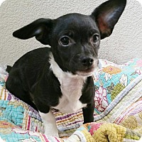 Adopt A Pet :: Mo - Stockton, CA