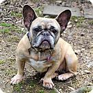 Adopt A Pet :: Fran
