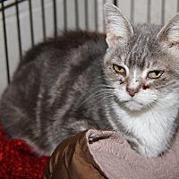 Adopt A Pet :: Peanut - Marietta, OH