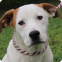Adopt A Pet :: ZOEY - Red Bluff, CA