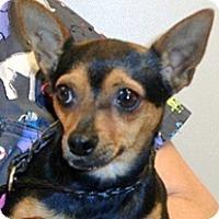 Adopt A Pet :: Mira - Wildomar, CA