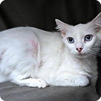 Adopt A Pet :: Mimsy - Herndon, VA