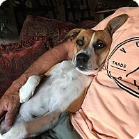 Adopt A Pet :: Maggie - Yuba City, CA