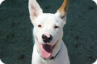 Shepherd (Unknown Type) Mix Dog for adoption in Grants Pass, Oregon - Kane