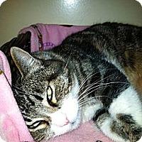Adopt A Pet :: Daisy - Laguna Woods, CA
