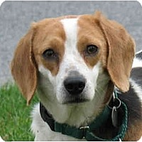 Adopt A Pet :: Maisy - ADOPTED! - Blairstown, NJ