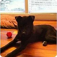Adopt A Pet :: Ash - Alexandria, VA