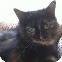 Adopt A Pet :: Zoey - Modesto, CA