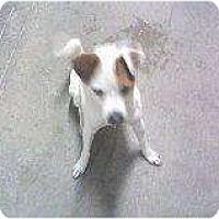 Adopt A Pet :: Brewster - Alliance, NE
