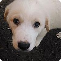Adopt A Pet :: Wilson - New Boston, NH