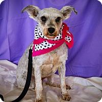 Adopt A Pet :: Lolly - Princeton, KY