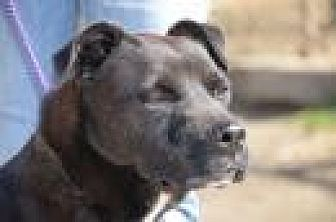 Labrador Retriever Mix Dog for adoption in Jackson, Mississippi - Nathan
