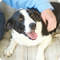 Adopt A Pet :: Gracie Mae - Homewood, AL