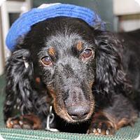 Adopt A Pet :: Jax - Marcellus, MI