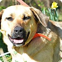 Adopt A Pet :: Junebug - Washington, GA