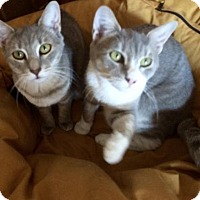 Adopt A Pet :: Topaz & Ruby - New York, NY