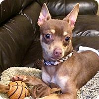 Adopt A Pet :: Mac - Manhattan, KS