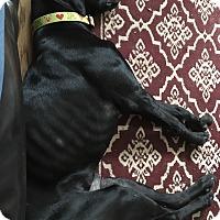 Adopt A Pet :: Buddha - Ogden, UT