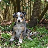 Adopt A Pet :: Nauset - Groton, MA