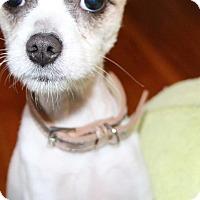 Adopt A Pet :: Baby Girl - Bucks County, PA