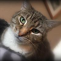Adopt A Pet :: Norma - St. Louis, MO