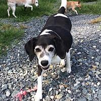 Adopt A Pet :: Sloopy - Albemarle, NC