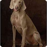 Adopt A Pet :: SUNNY - Las Vegas, NV
