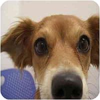 Adopt A Pet :: Cindy - Phoenix, AZ