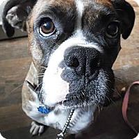 Adopt A Pet :: Petunia - Cincinnati, OH