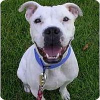 Adopt A Pet :: Georgia - Albany, GA