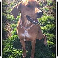 Adopt A Pet :: Sissy - Indian Trail, NC
