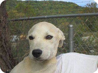 Terrier (Unknown Type, Small) Mix Dog for adoption in Wilkes Barre, Pennsylvania - Opel