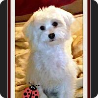 Adopt A Pet :: Georgie - Rancho Cucamonga, CA