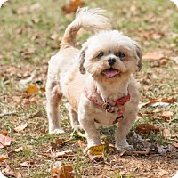 Adopt A Pet :: Ashley - Tallahassee, FL