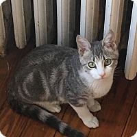 Adopt A Pet :: Bear (adoption pending) - Richmond, VA