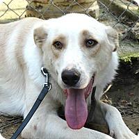 Adopt A Pet :: Gizmo - Toronto, ON