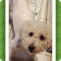 Adopt A Pet :: Zeke - OK - Tulsa, OK