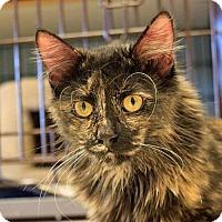 Adopt A Pet :: Asia - Spokane Valley, WA