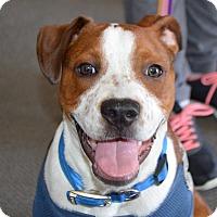 Adopt A Pet :: Franklin - Plainfield, CT