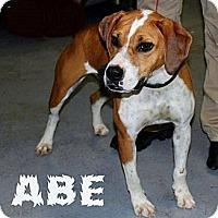 Adopt A Pet :: Abe - Chilhowie, VA