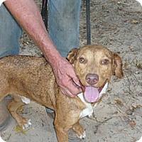 Adopt A Pet :: Travis - Pointblank, TX