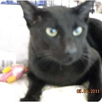 Adopt A Pet :: RA - Riverside, RI